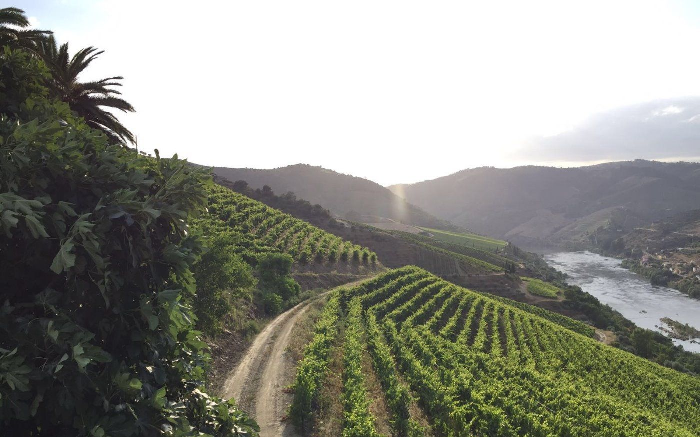ONE DAY IN DOURO